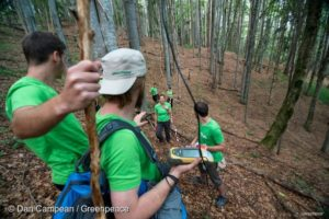 Mapping the Ancient Forest at Romanian Rescue Station