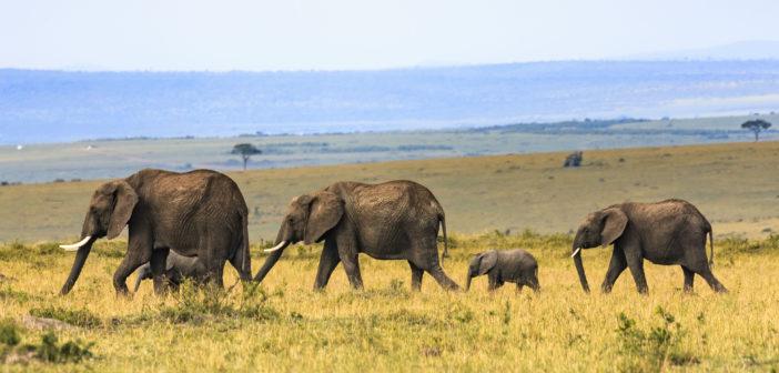 Hoffnung für die letzten Elefanten