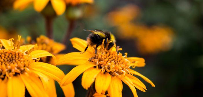 Bio für die Bienen